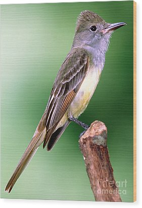 Great Crested Flycatcher Wood Print by Millard H. Sharp