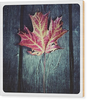 Maple Leaf Wood Print by Natasha Marco