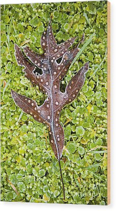 Plant Details Wood Print by Tim Hester