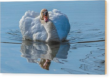 Mute Swan Wood Print by Brian Stevens