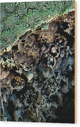 Broccoli Wood Print by Stefan Diller