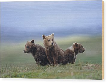 4 Young Brown Bear Cubs Huddled Wood Print by Eberhard Brunner