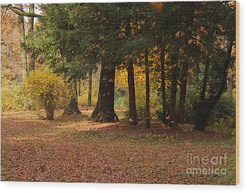 Autumn Wood Print by Angela Doelling AD DESIGN Photo and PhotoArt