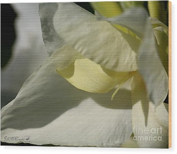 Dwarf Canna Lily Named Ermine Wood Print by J McCombie