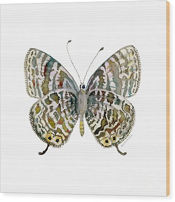 51 Lang's Short-tailed Blue Butterfly Wood Print by Amy Kirkpatrick