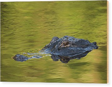 Usa, Florida, St Wood Print by Jaynes Gallery