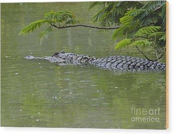 American Alligator Wood Print by Mark Newman