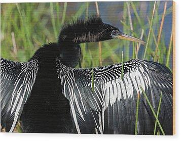 Usa, Florida, Everglades National Park Wood Print by Jaynes Gallery