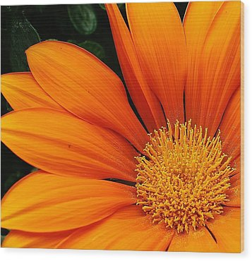 A Burst Of Orange Wood Print by Bruce Bley