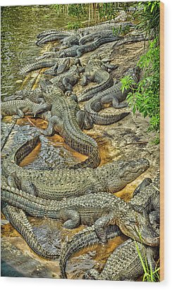 A Congregation Of Alligators Wood Print by Rona Schwarz