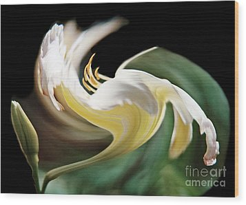 A Drunk Daylily Bloom Wood Print by ImagesAsArt Photos And Graphics