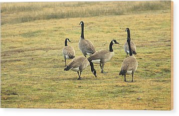 A Flock Of Canada Geese Wood Print by Rima Biswas