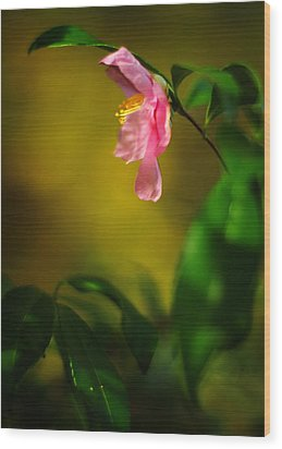 A Golden Day Portrait Of A Pink Camellia Wood Print by Rebecca Sherman