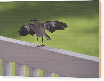 A Little Visitor Northern Mockingbird Wood Print by Terry DeLuco