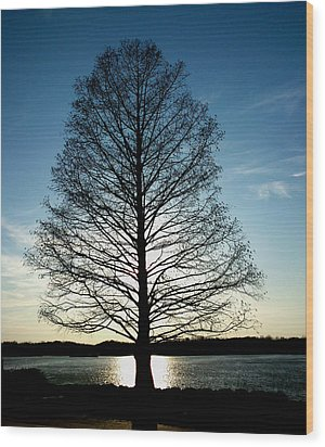 A Lonely Tree Wood Print by Lucy D