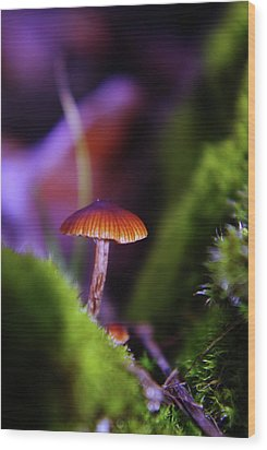 A Red Mushroom  Wood Print by Jeff Swan