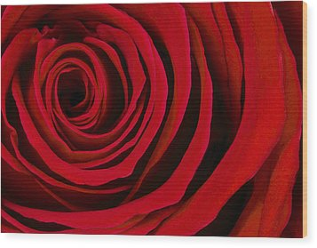 A Rose For Valentine's Day Wood Print by Adam Romanowicz