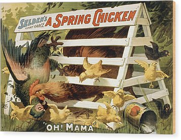 A Spring Chicken Wood Print by Aged Pixel