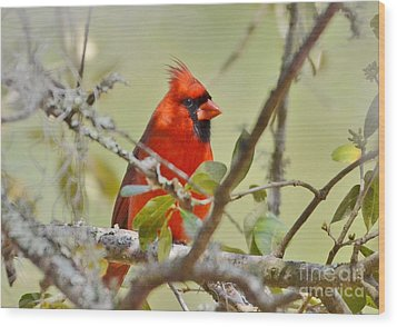 All Dressed In Red Wood Print by Kathy Baccari
