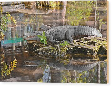 Alligator Mississippiensis Wood Print by Christine Till