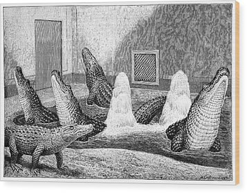 Alligators In Captivity Wood Print by Science Photo Library