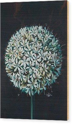 Allium Wood Print by Lynette Yencho