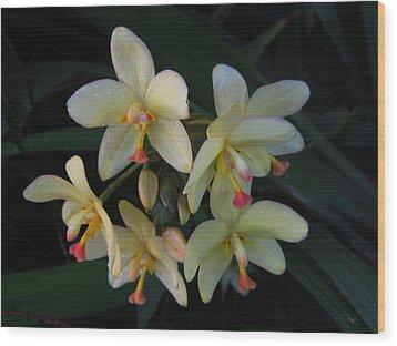 Aloha Wood Print by Ange Sylvestri