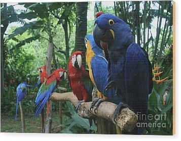 Aloha Kaua Aloha Mai No Aloha Aku Beautiful Macaw Wood Print by Sharon Mau