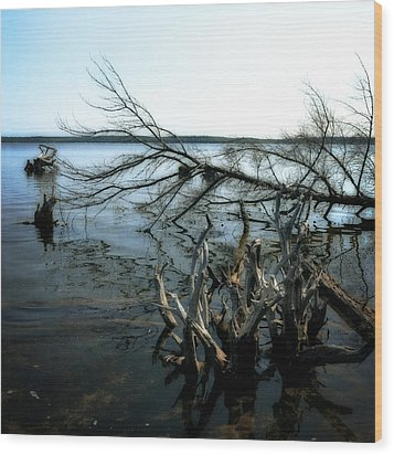Along The Lost Lake Trail Wood Print by Michelle Calkins
