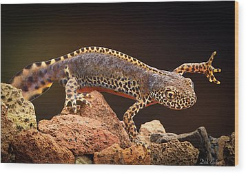 Alpine Newt Wood Print by Dirk Ercken