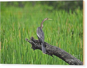 American Anhinga Wood Print by Al Powell Photography USA