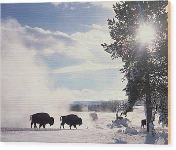 American Bison In Winter Wood Print by Tim Fitzharris