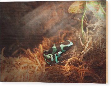 Animal - Frog - Lick The Green Frog Wood Print by Mike Savad