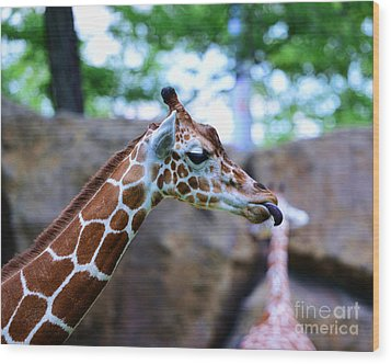 Animal - Giraffe - Sticking Out The Tounge Wood Print by Paul Ward