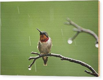 Another Rainy Day Hummingbird Wood Print by Christina Rollo