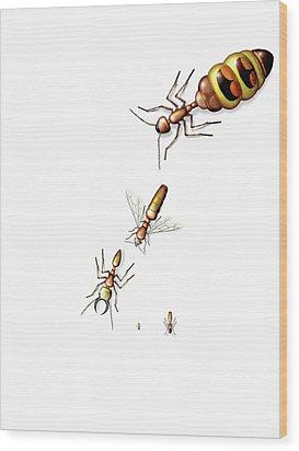 Ant Castes Wood Print by Claus Lunau