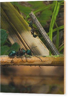 Ants Adventure 2 Wood Print by Bob Orsillo