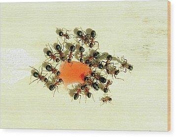 Ants Feeding Wood Print by Heiti Paves