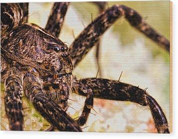 Arachnophobia Wood Print by Bob Orsillo