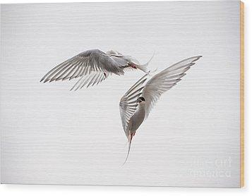 Arctic Tern - Sterna Paradisaea - Pas De Deux  Wood Print by Ian Monk
