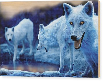 Arctic White Wolves Wood Print by Mal Bray