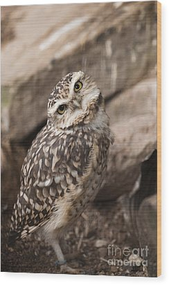 Are You Looking At Me? Wood Print by Anne Gilbert