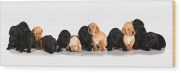 Ash Trail Pups Wood Print by Pam Gabriel