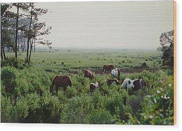 Assateague Herd 2 Wood Print by Joann Renner