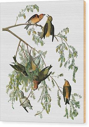 Audubon Crossbill Wood Print by Granger