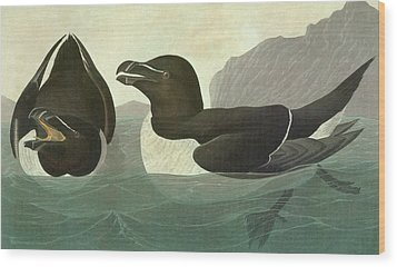 Audubon Razorbill Wood Print by Granger