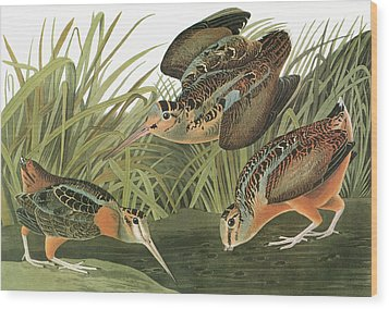 Audubon Woodcock Wood Print by Granger