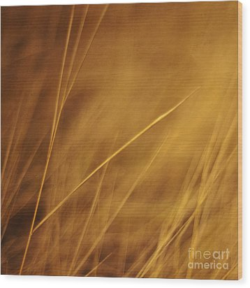 Aurum Wood Print by Priska Wettstein