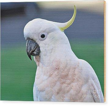 Australian Birds - Cockatoo Wood Print by Kaye Menner