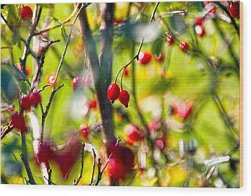 Autumn Berries  Wood Print by Stelios Kleanthous